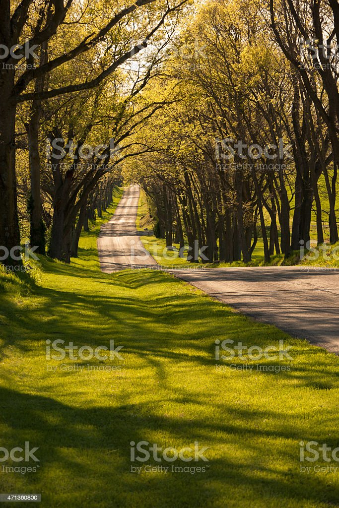 Beautiful winding country road shaded by old trees in springtime stock photo