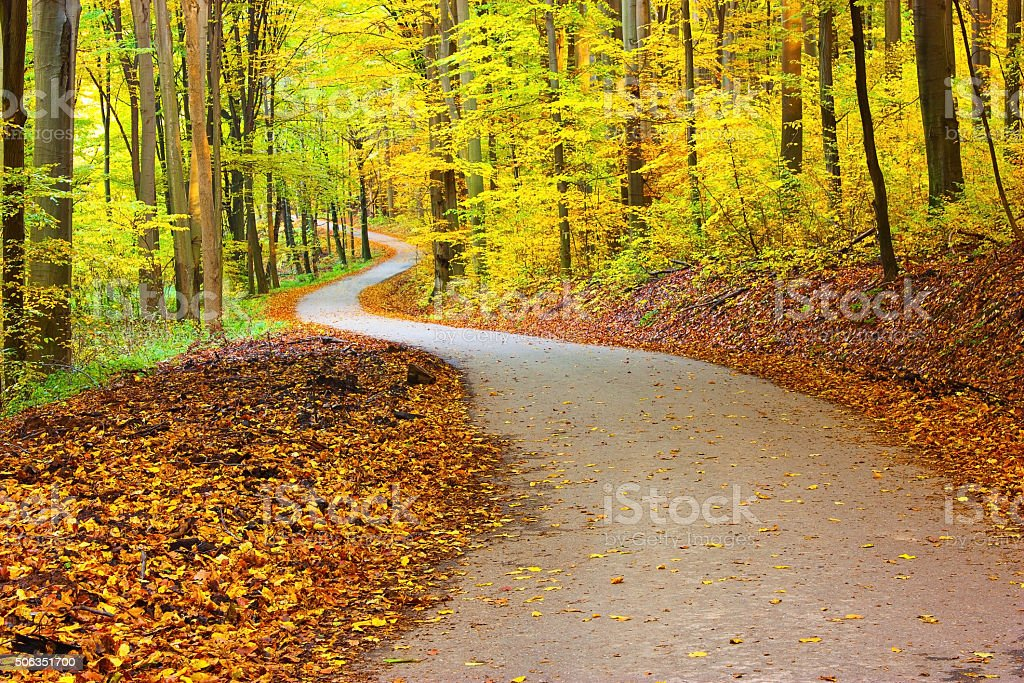 Beautiful winding road through forest stock photo