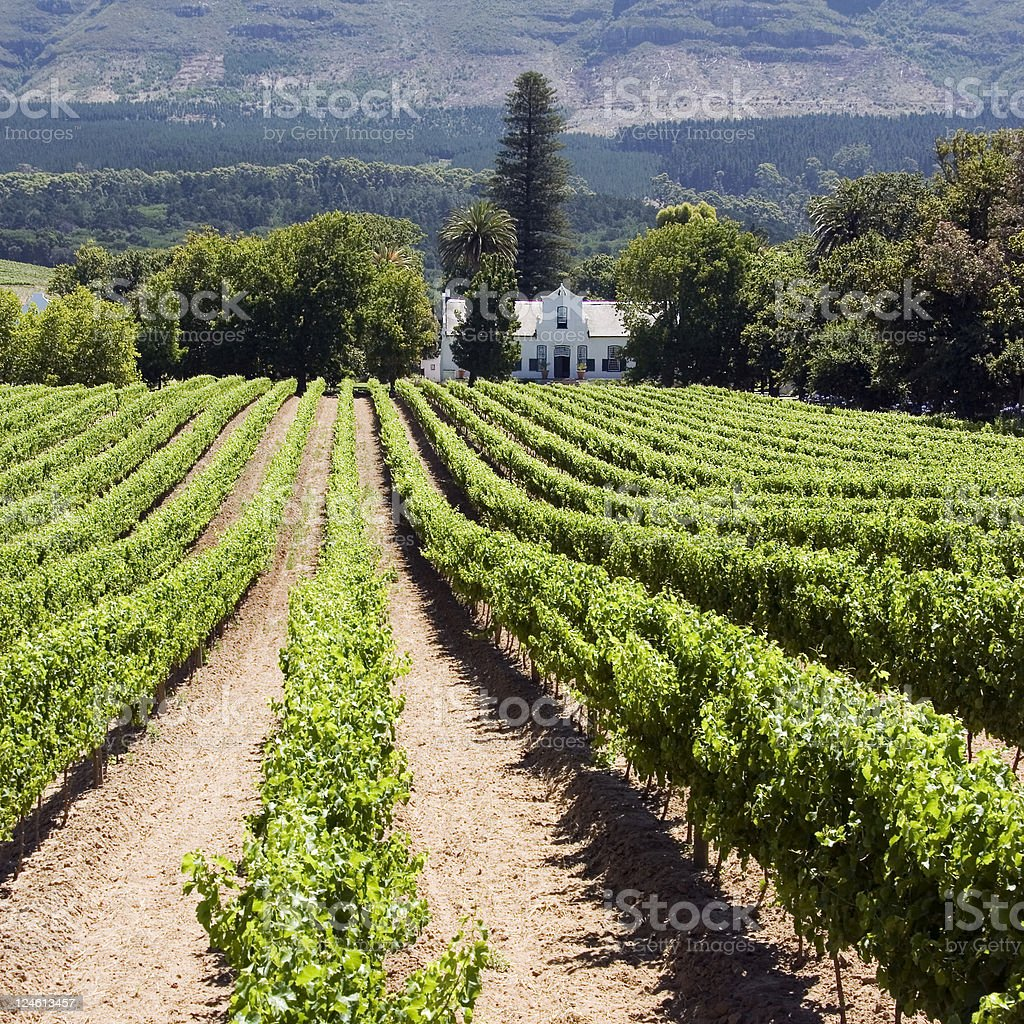 A beautiful winery in South Africa stock photo