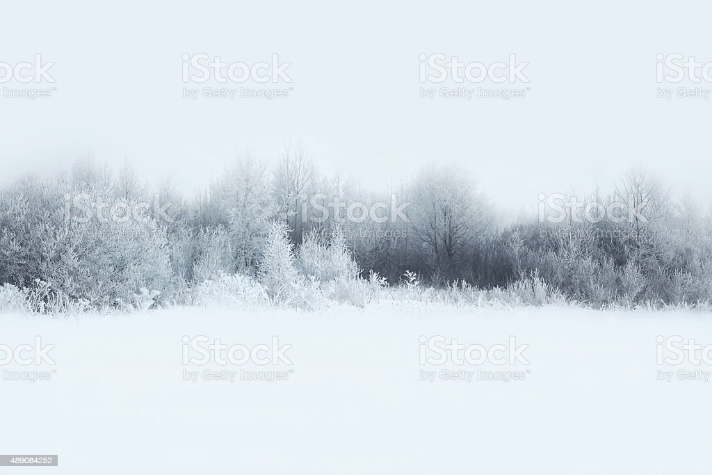 Beautiful winter forest landscape, trees covered with snow stock photo