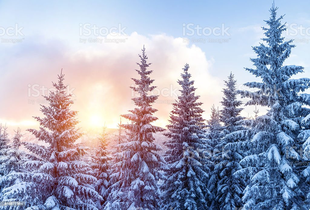 Beautiful winter forest stock photo