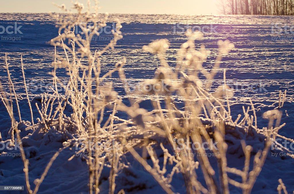 beautiful winter hoarsfrost on  plants  and sunrise sunlight stock photo