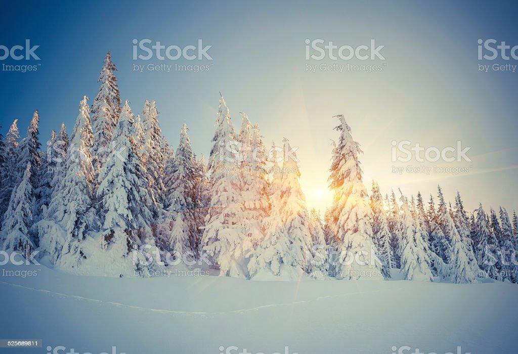 Beautiful winter landscape in the mountain forest. stock photo