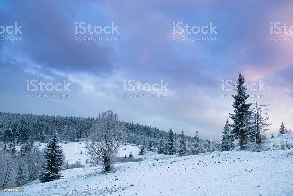 Paysage d'hiver magnifique avec la neige couvertes d'arbres.  Carpathians, photo libre de droits