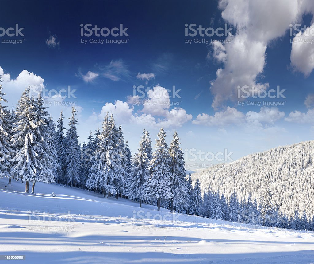 Beautiful winter landscape with snow covered trees. royalty-free stock photo