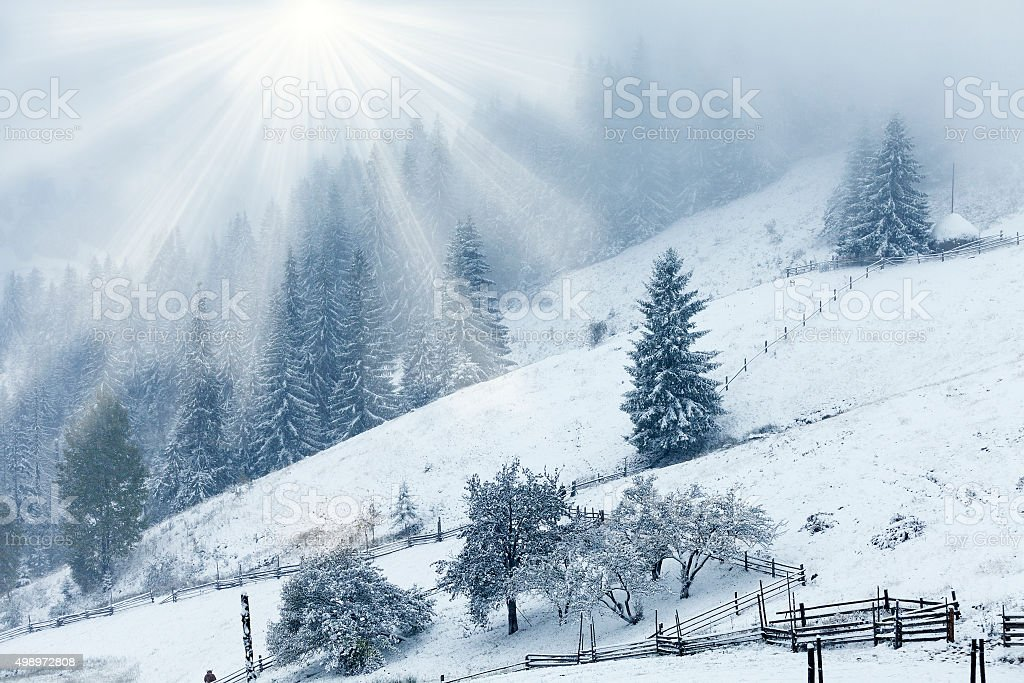 Beautiful winter mountains landscape with snowy fir forest stock photo