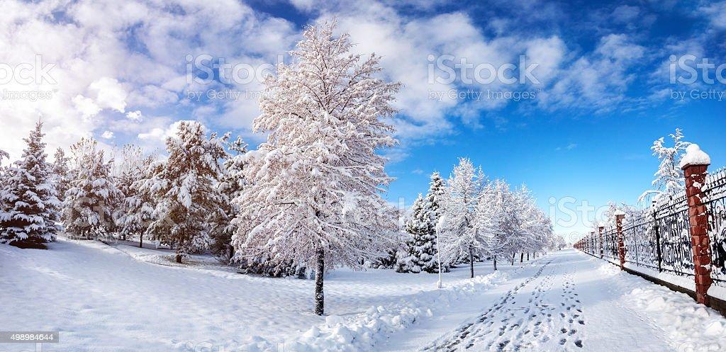 Beautiful Winter park panorama stock photo