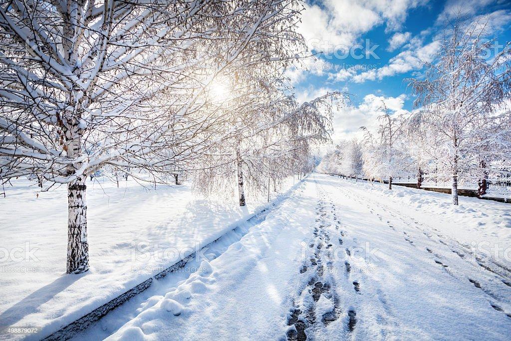 Beautiful Winter park stock photo