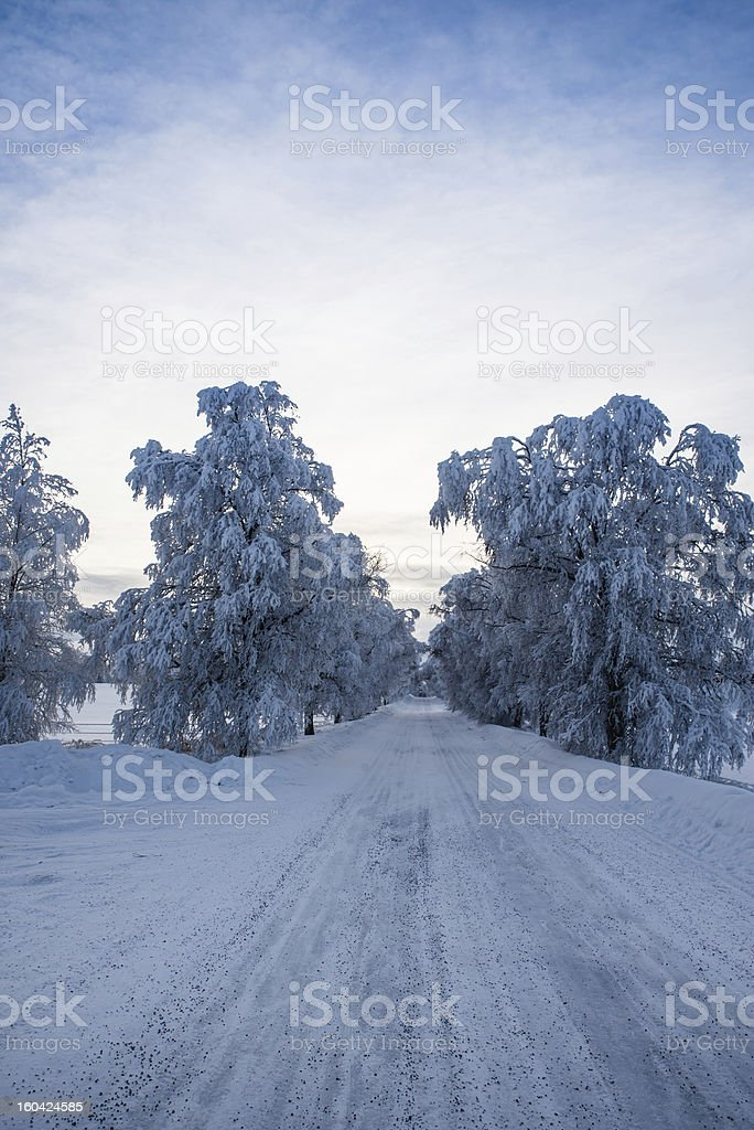 beautiful winter road royalty-free stock photo