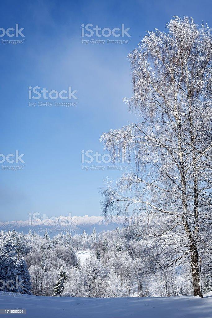 Beautiful Winter Scene in Alps Slovenia Europe stock photo