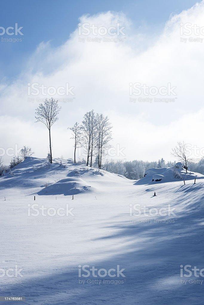 Beautiful Winter Scene in Slovenia Europe royalty-free stock photo