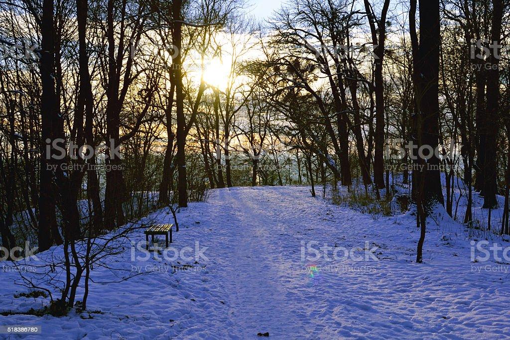Hermosa puesta de sol con árboles de invierno en la nieve foto de stock libre de derechos