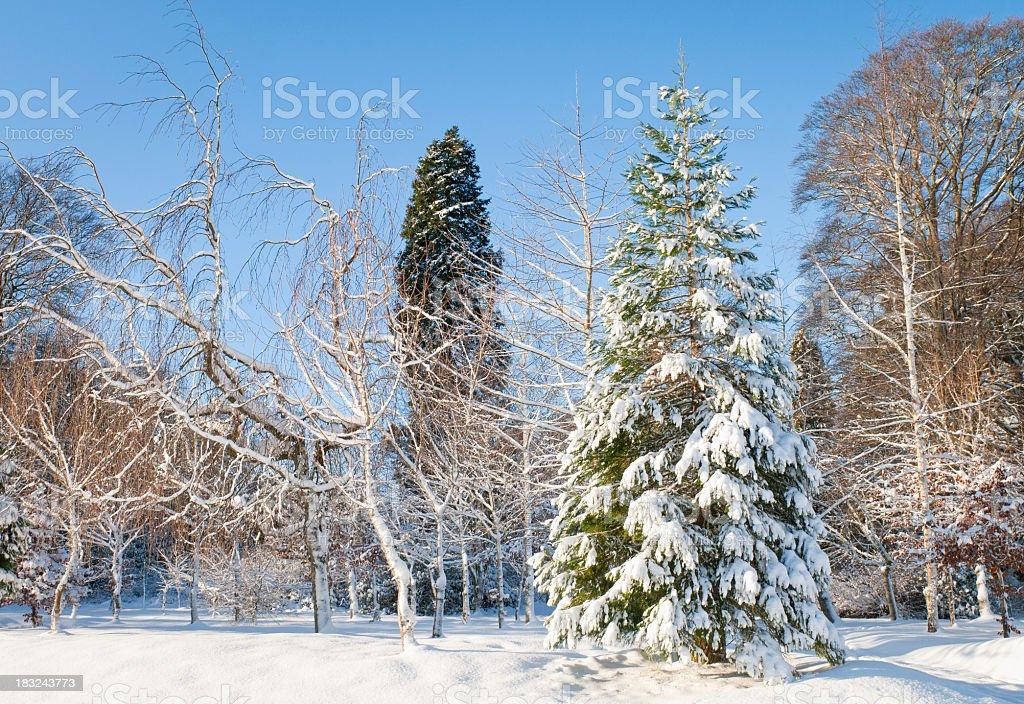 Beautiful Winter Wonderland stock photo