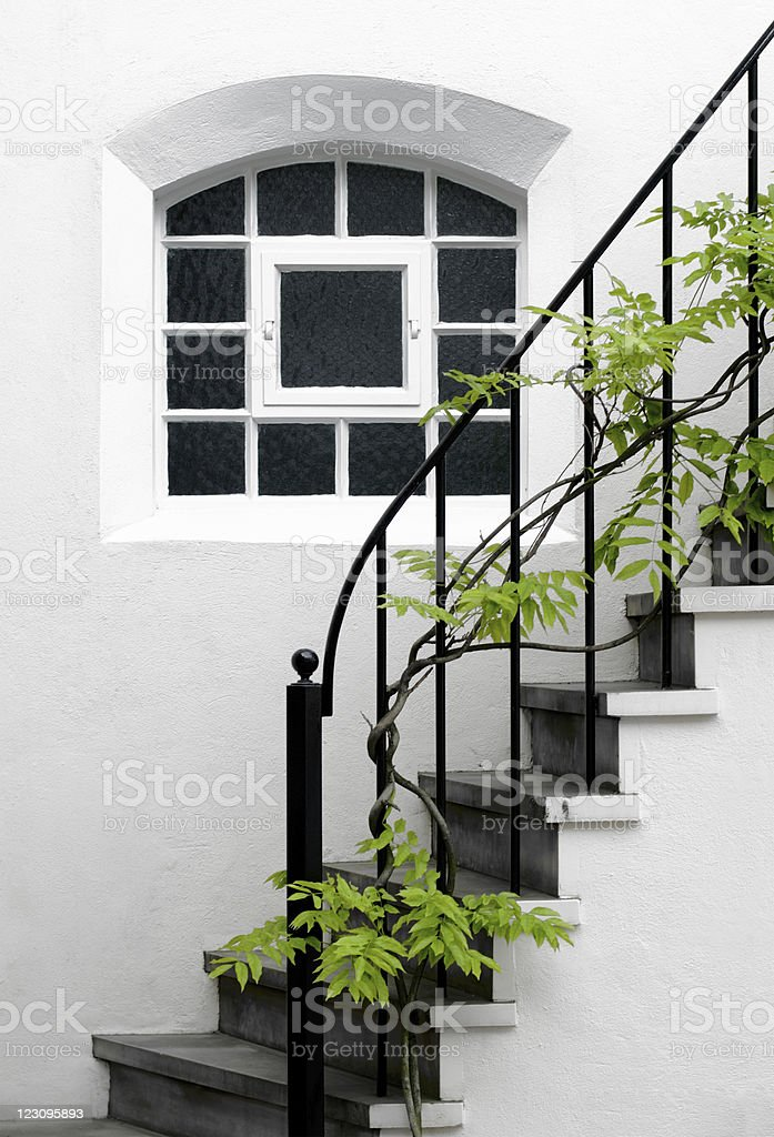 Beautiful Wisteria plant grows across an elegant domestic staircase royalty-free stock photo
