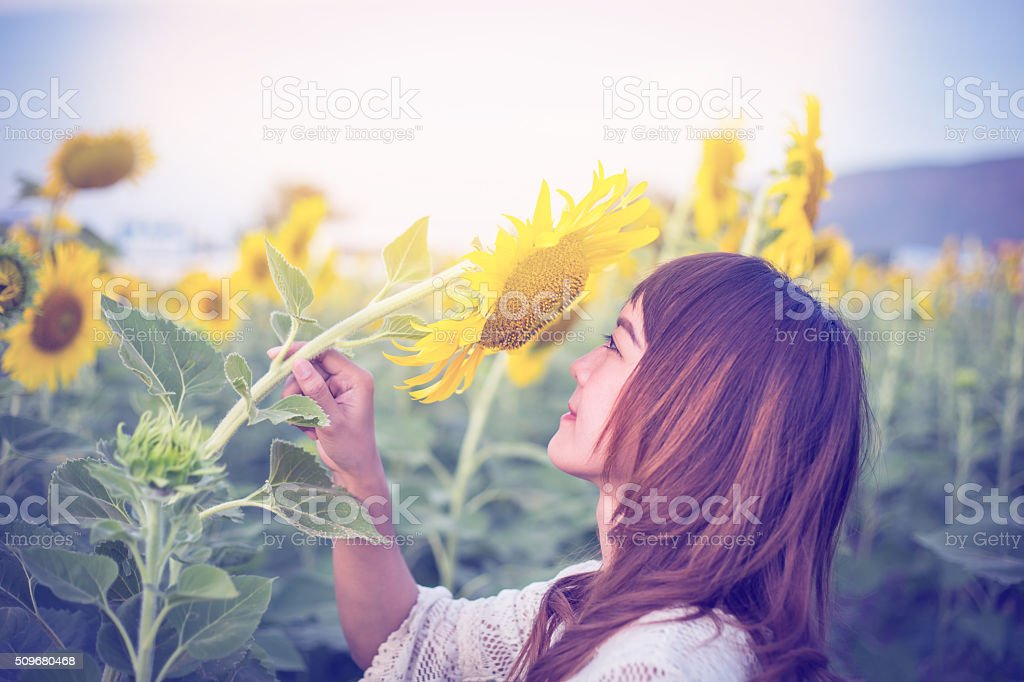 Beautiful woman enjoys blooming sunflower stock photo
