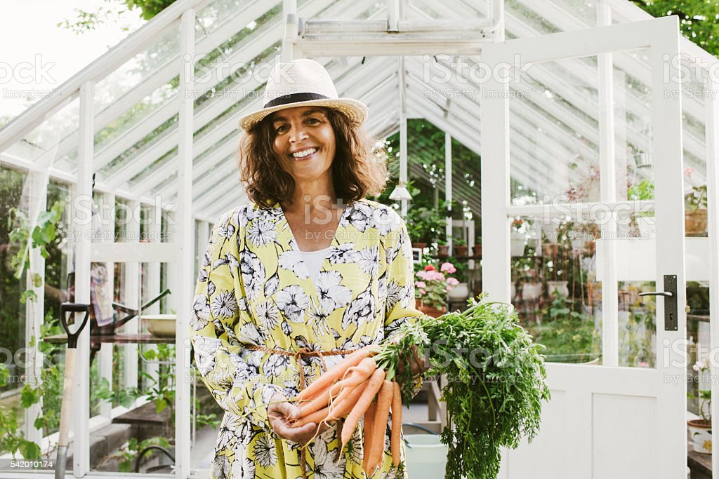 Beautiful woman gardening holding carrots from the garden stock photo