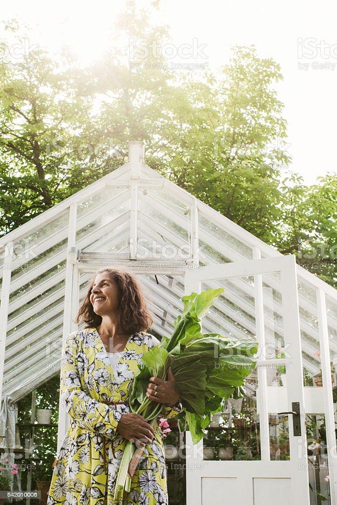 Beautiful woman gardening holding rhubarb from the garden stock photo