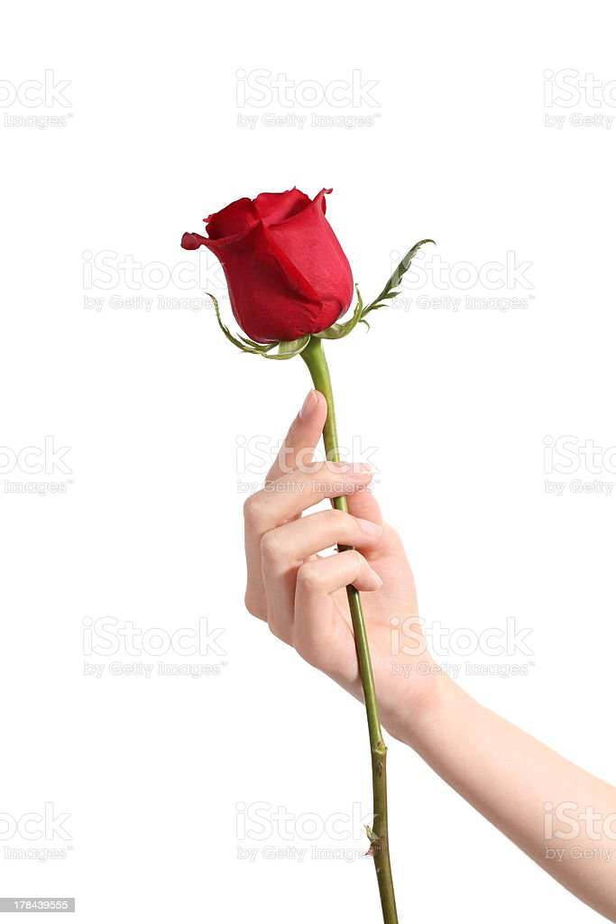 Beautiful woman hand holding a red rose stock photo