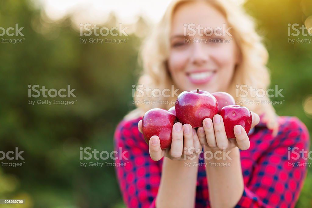 Beautiful woman harvesting apples, eating them stock photo