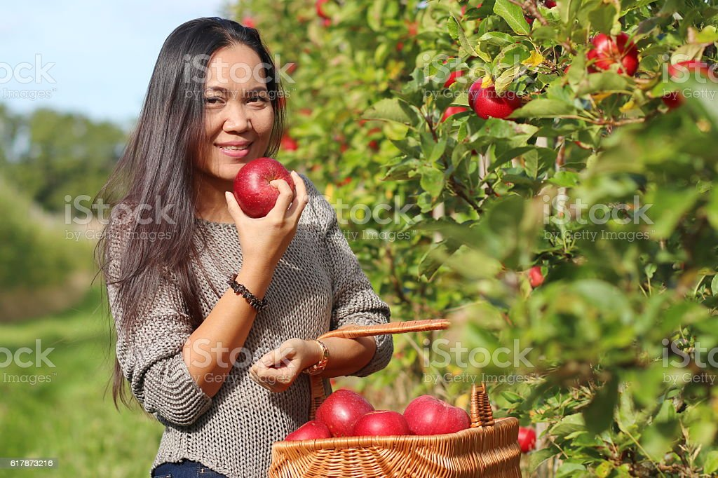 Beautiful woman holding red apples in the orchard. stock photo