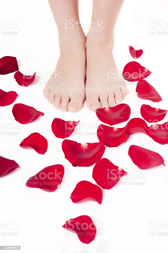 Beautiful woman legs with rose petals royalty-free stock photo