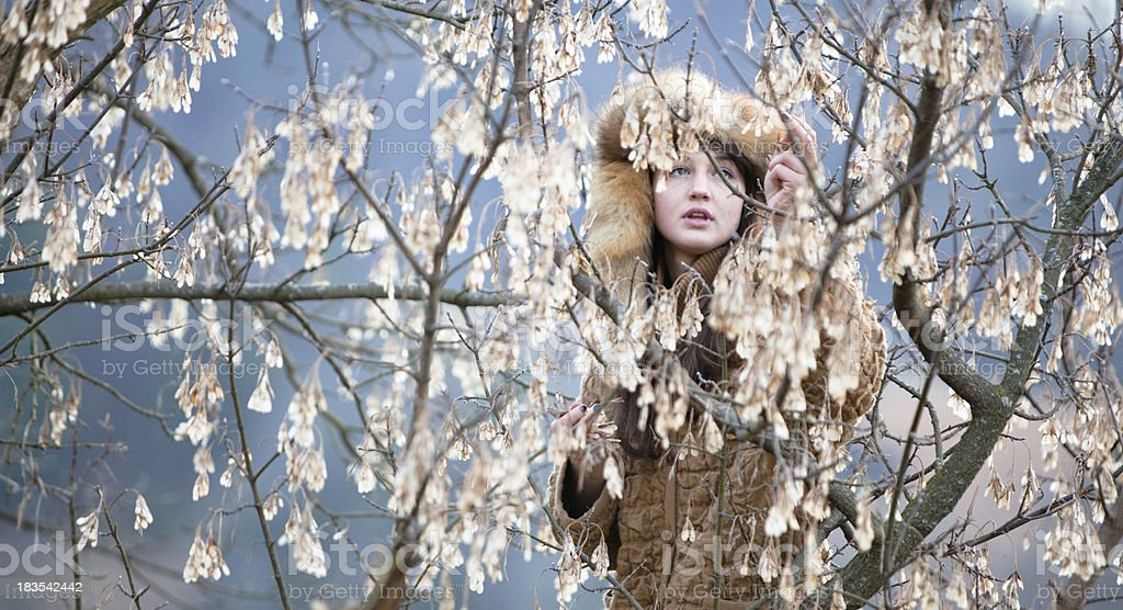 Beautiful woman picking leaves in an old maple tree royalty-free stock photo