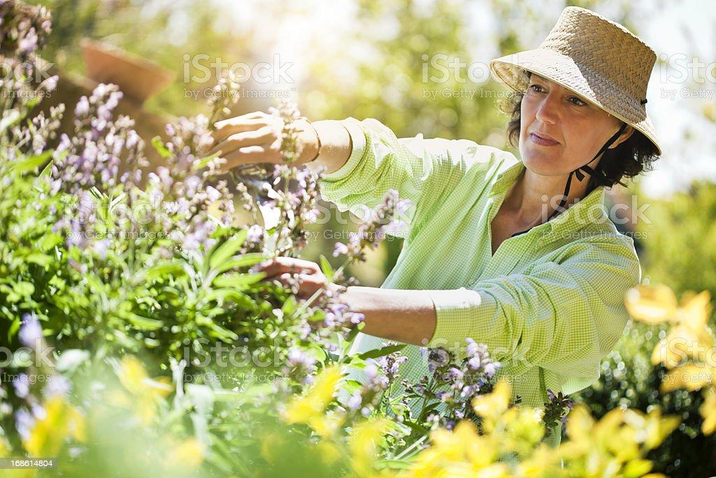 Beautiful woman pruning flowers in the garden stock photo