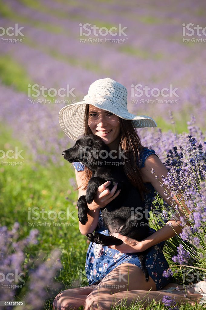 Beautiful woman with a puppy sitting in a field of lavender stock photo