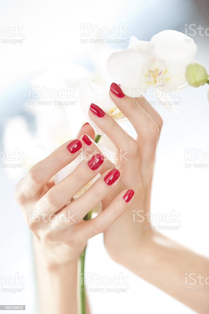 Beautiful woman's hands holding orchid flower royalty-free stock photo