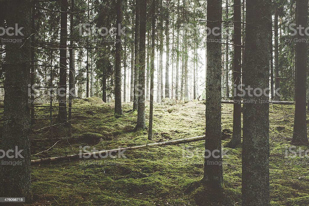 Beautiful woods forest stock photo