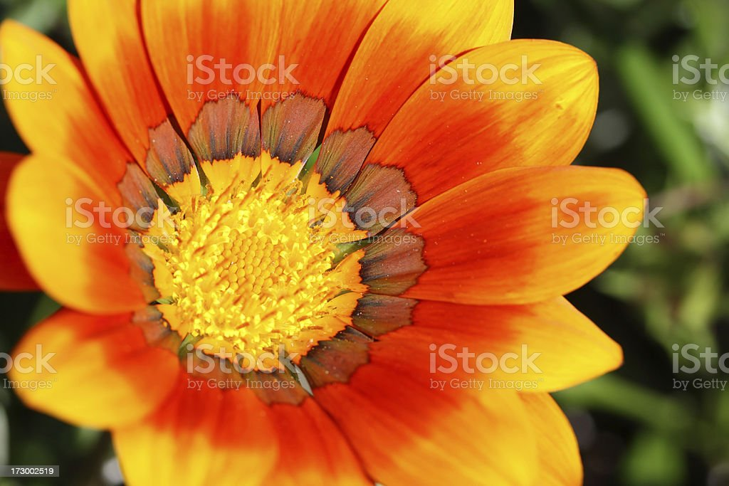 Beautiful yellow and orange flower royalty-free stock photo
