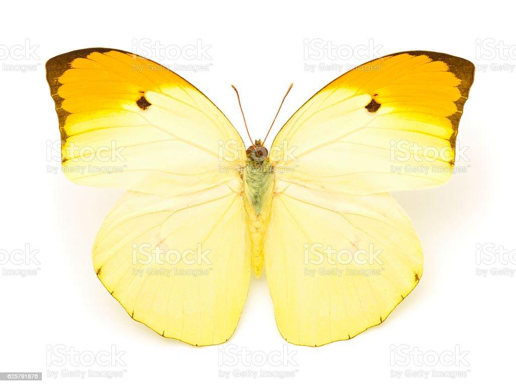 Beautiful yellow butterfly stock photo