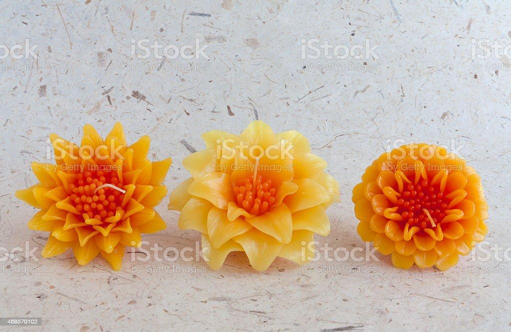 Beautiful yellow candle flower set royalty-free stock photo