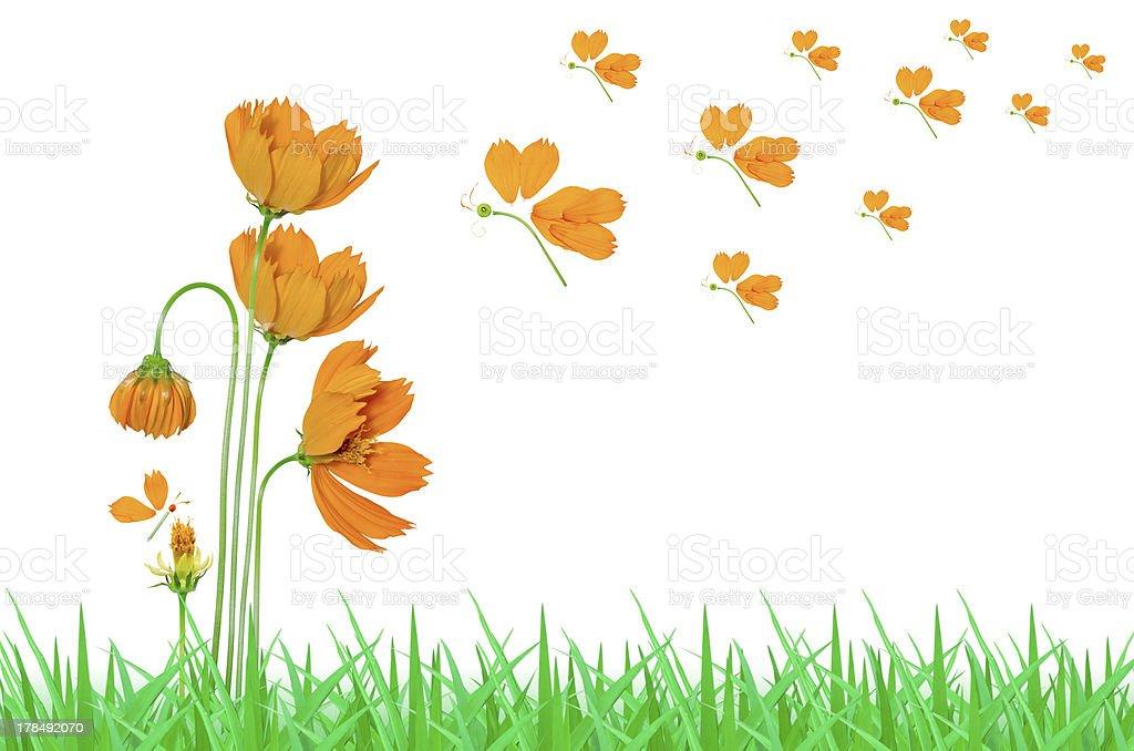 Beautiful yellow cosmos flower royalty-free stock photo