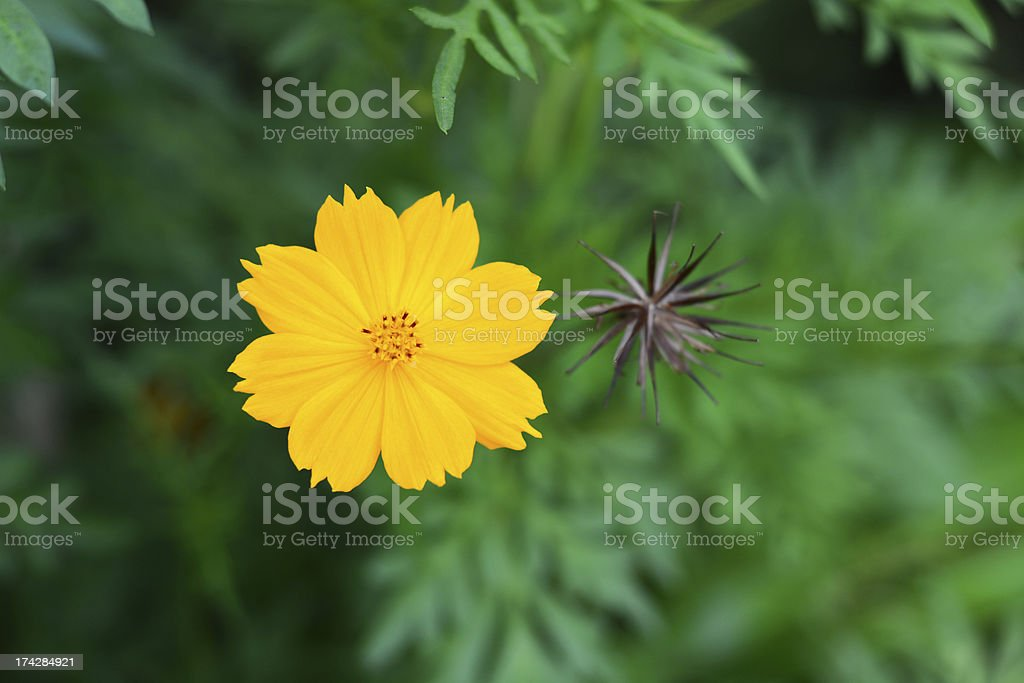 Beautiful yellow floral royalty-free stock photo