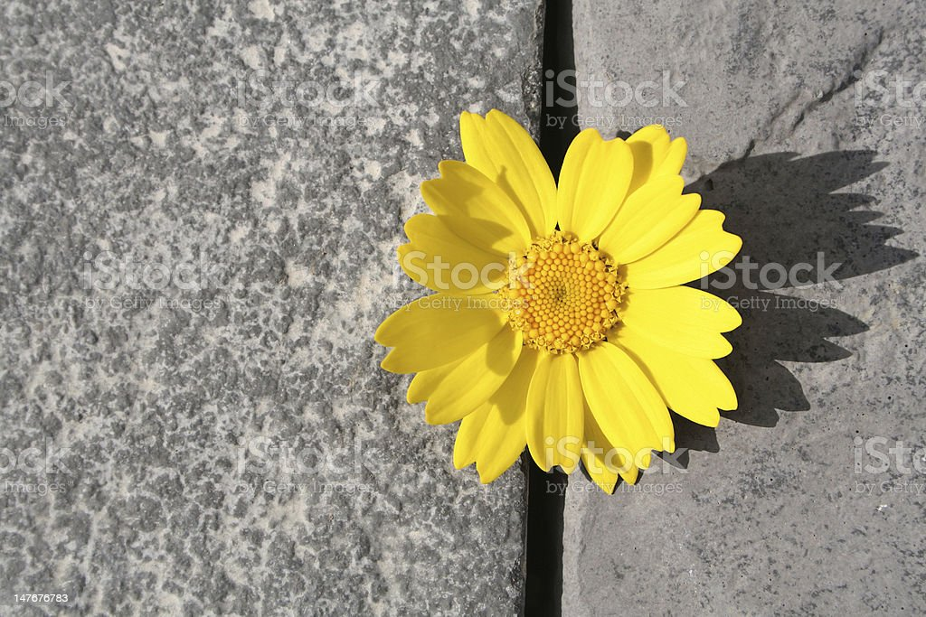 Beautiful Yellow Flower stock photo