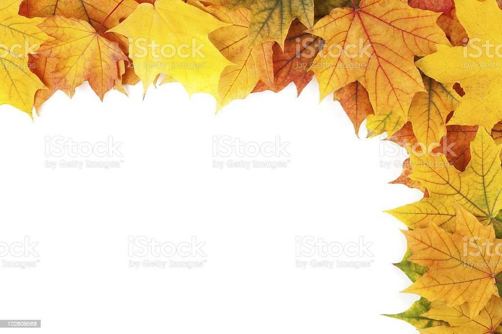 Beautiful yellow leaves isolated on white background stock photo