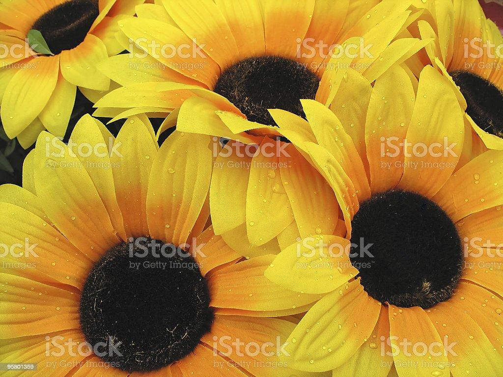 Pétala de girassol amarelo bonito com Orvalho grande foto de stock royalty-free