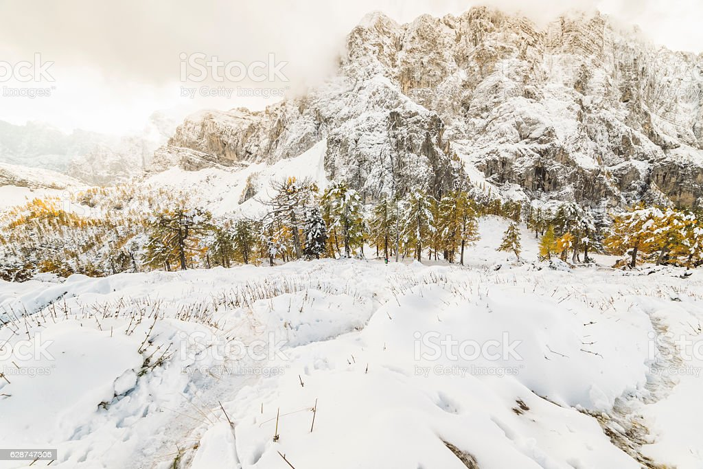 Beautiful yellow trees lined in the mountains during winter stock photo