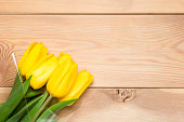 beautiful yellow tulips and space wooden boards background