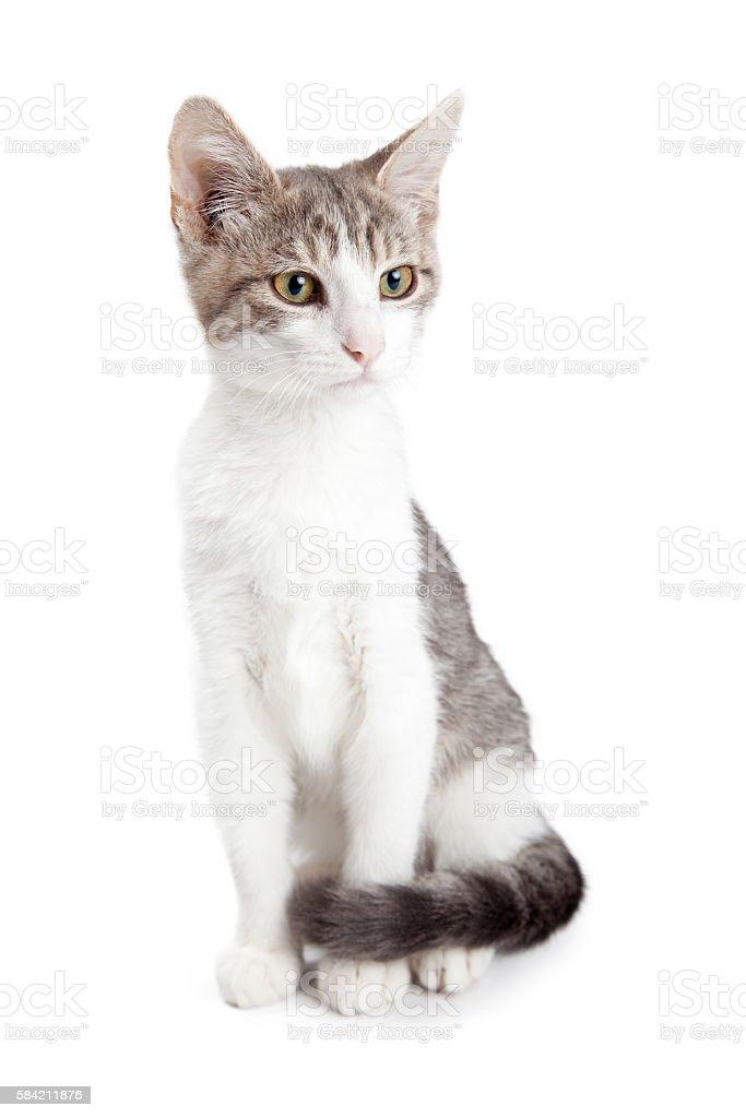 Beautiful Young Kitten Sitting on White stock photo