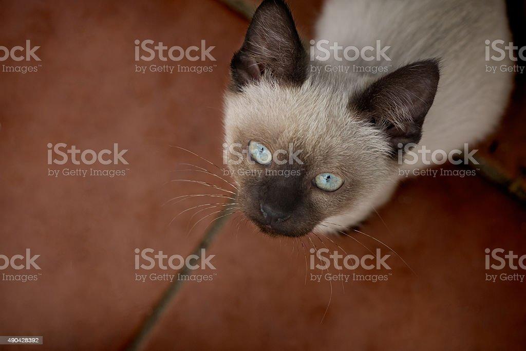 Bela jovem marrom claro e azul olhos de gato olhando para cima foto royalty-free