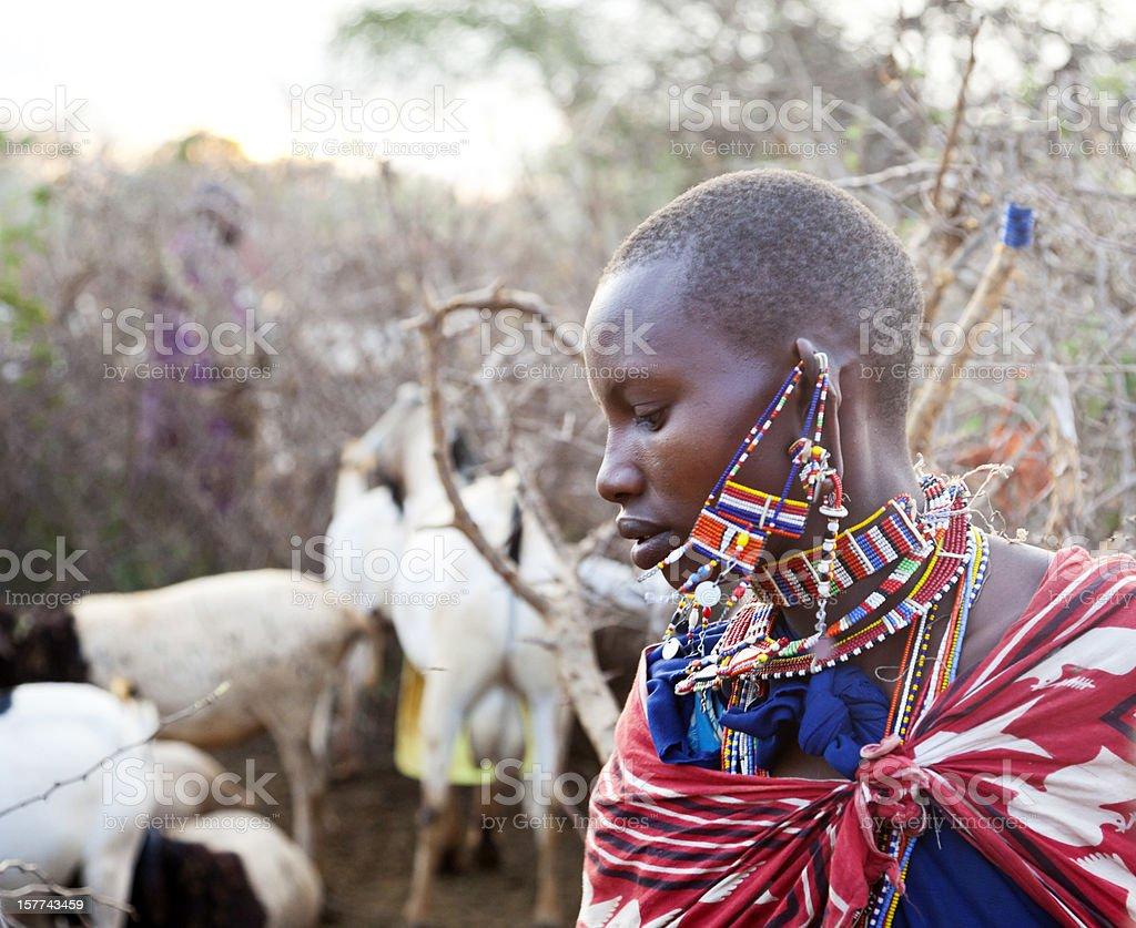 Beautiful young maasai woman with goats. stock photo