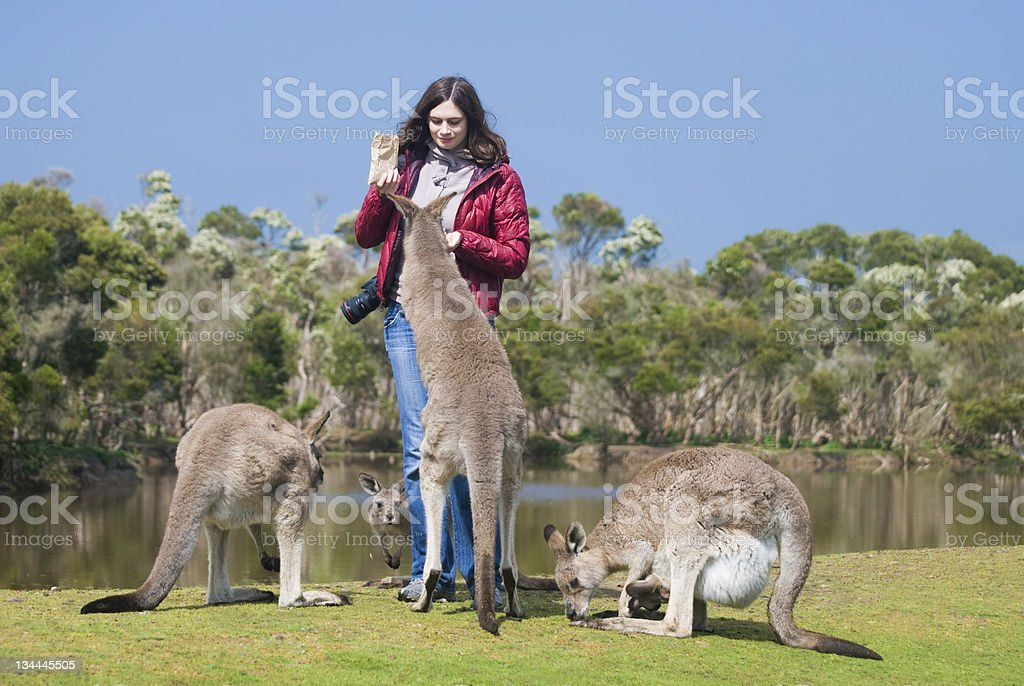 Beautiful young woman feeding kangaroos in Wildlife Park, Australia royalty-free stock photo