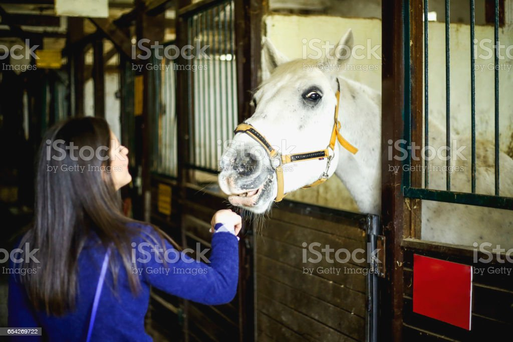 Beautiful young woman with a gorgeous horse stock photo