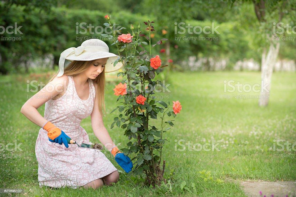 Beautiful young women weeding roses in her garden stock photo