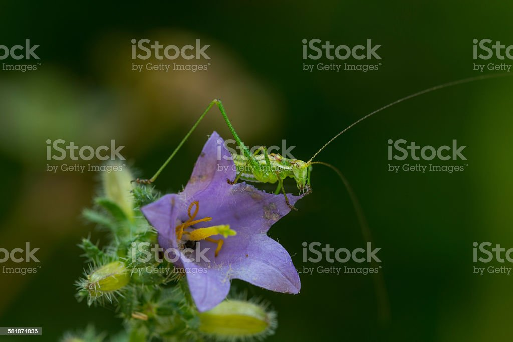 Beautifull flower and grasshopper stock photo