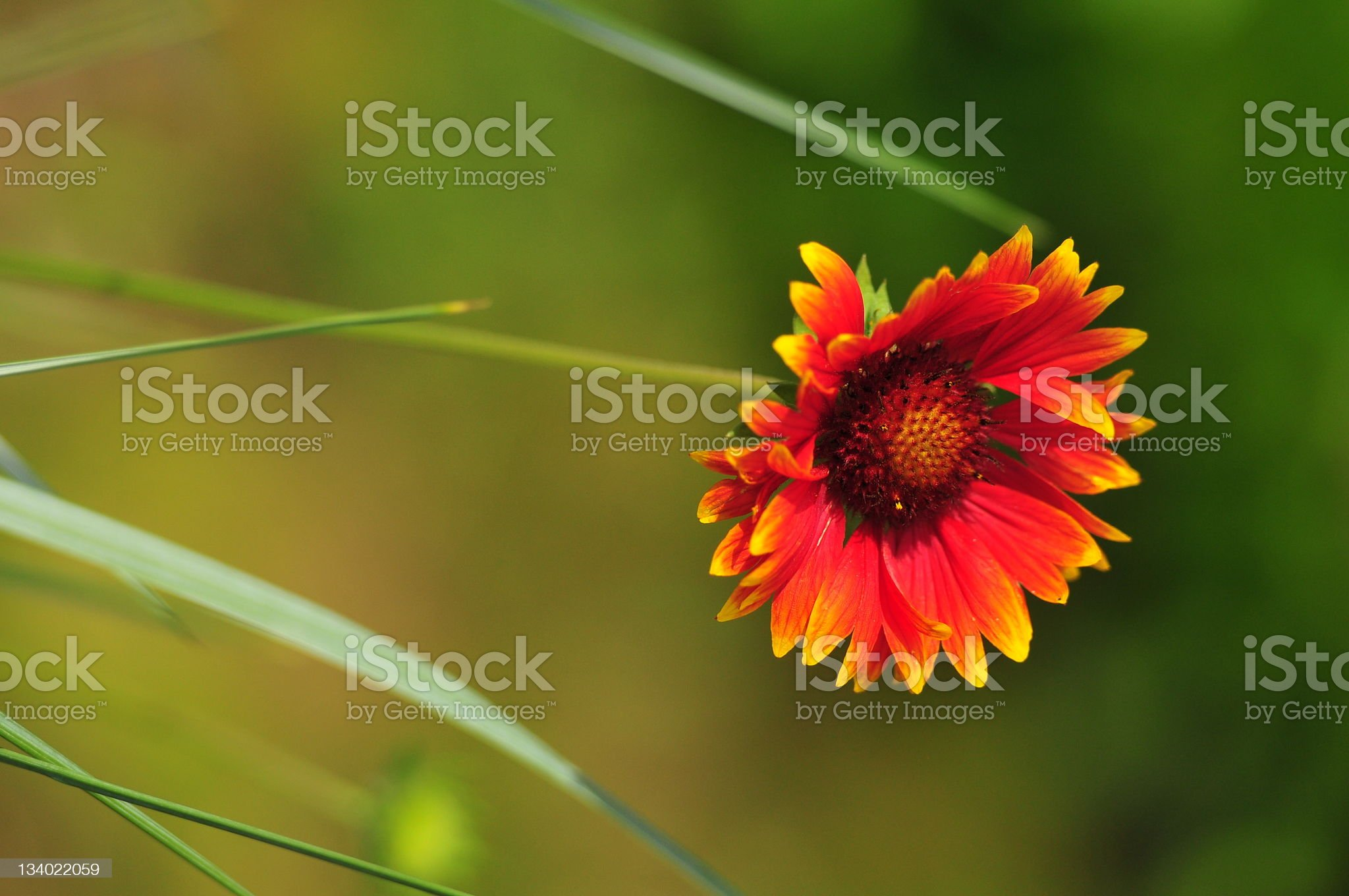 Beautifull flower royalty-free stock photo