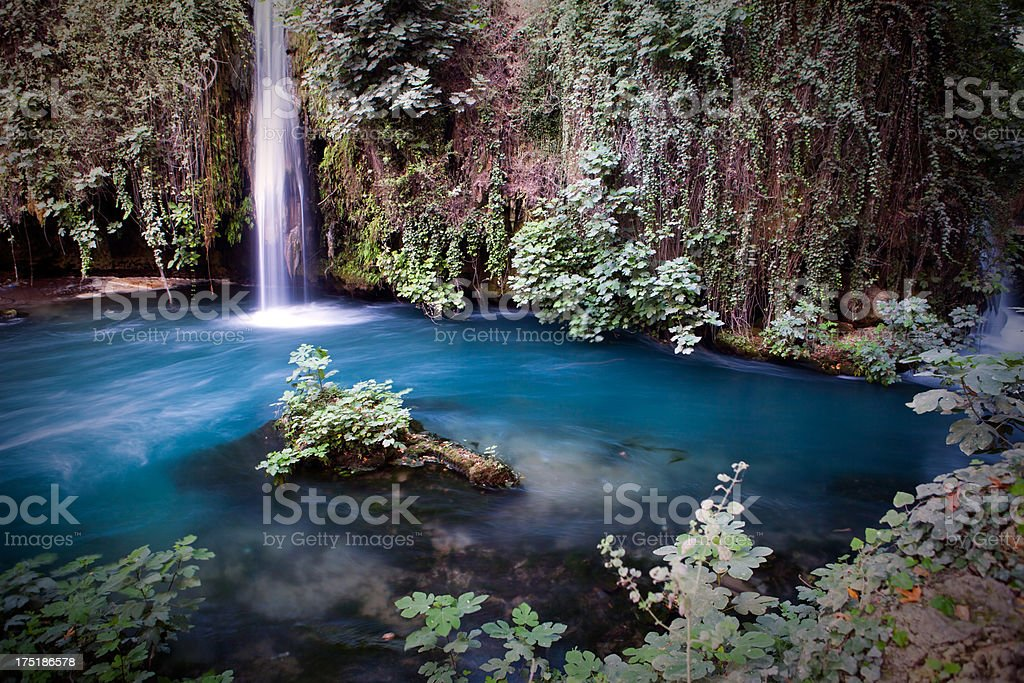 Beautifull Garden, plant and waterfall royalty-free stock photo