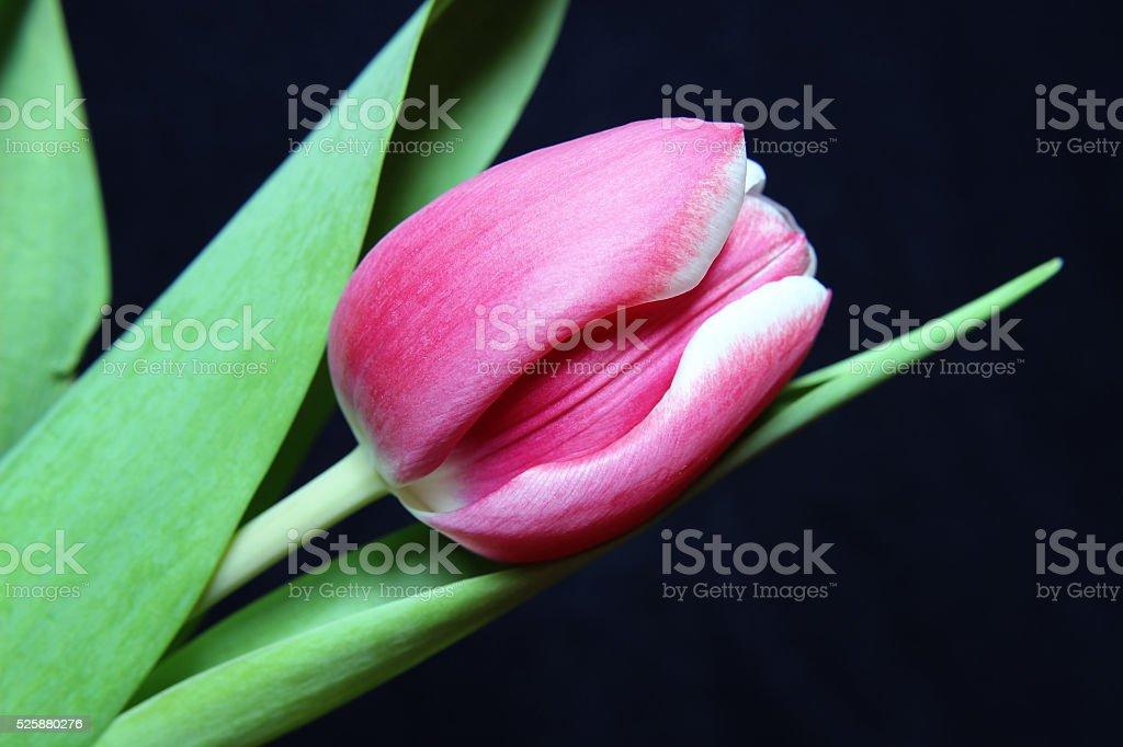 Beautifull pink flower stock photo